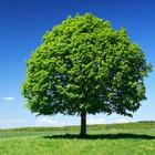 Tree/Leaf Sounds